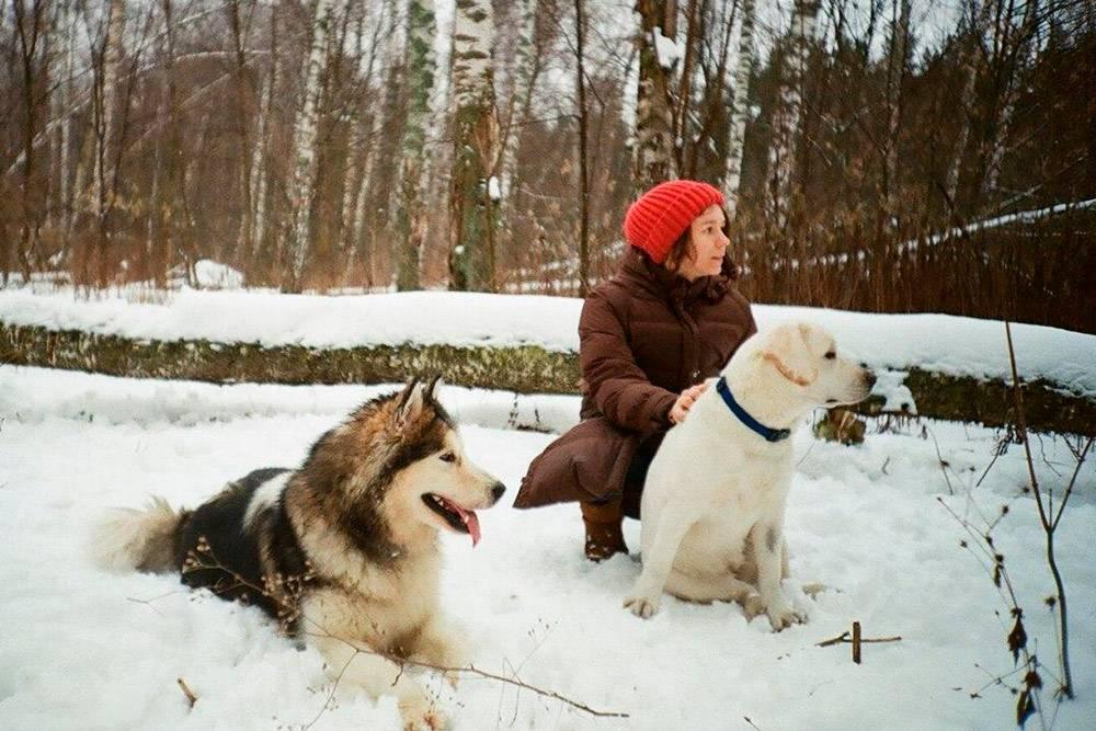 В декабре 2019 года у нас неожиданно стало две собаки: мы взяли на передержку пса друзей — маламута Робина