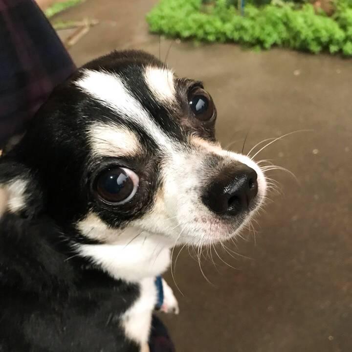 Наш пес