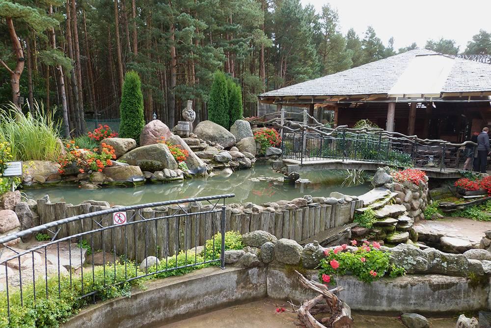 Часть территории кафе HBH находится в сосновом лесу. А в этом пруду плавали золотые рыбки