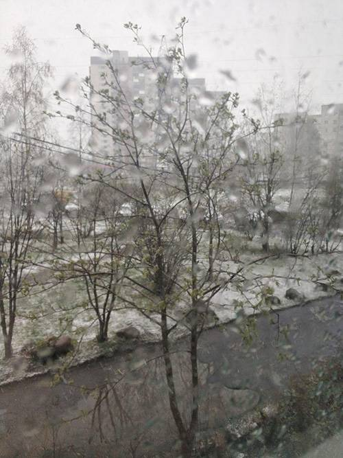 20 мая 2020 года в Петрозаводске выпал снег