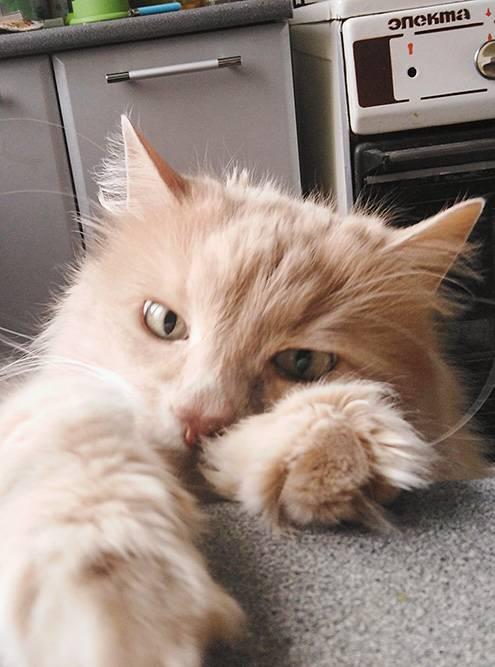 Одна знакомая сказала, что коты перенимают характер хозяев