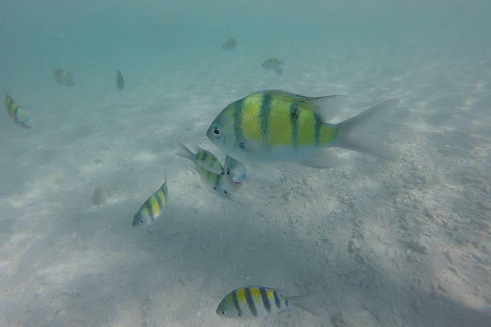 Вода в Андаманском море чистая и прозрачная. Плавать с маской здесь одно удовольствие