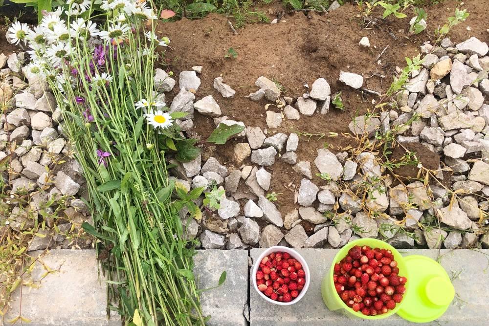 Дачный урожай