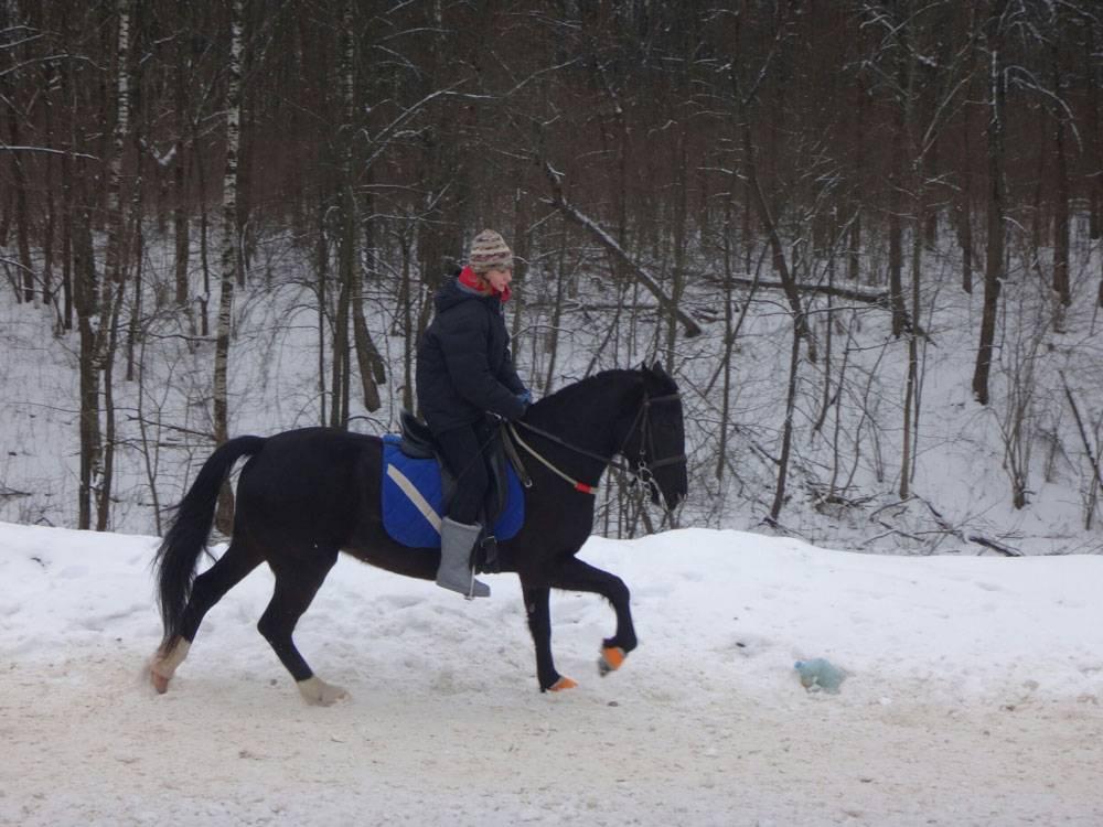 Это полукровная лошадь: смесь рысака и тяжеловоза. Но внешне и по своим качествам она ничем не уступает дорогим породистым лошадям. Очень общительная, быстро запоминает команды, прыгает до метра в высоту. Благодаря тяжеловозу в крови она хорошо держится, не поскальзывается на плохой дороге, не спотыкается
