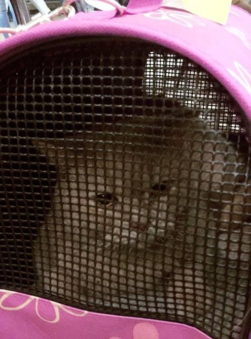 Кошка в аэропорту. Недовольная