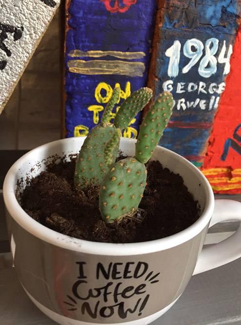 А этот кактус с ушками я назвала Плейбоем