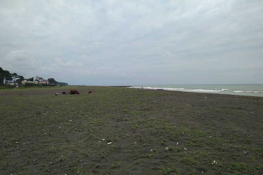 На пляже с магнитным песком не рекомендуют оставлять телефоны и банковские карты. Даже в хорошую погоду на нем было мало людей, а рядом иногда паслись коровы