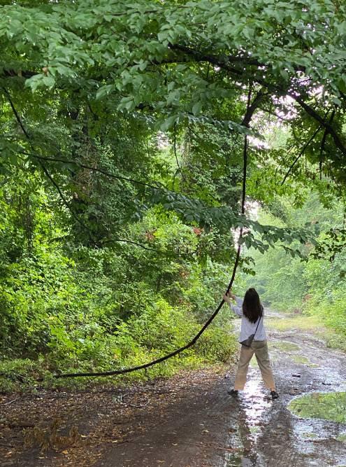 На некоторых участках дороги с деревьев свисают лианы