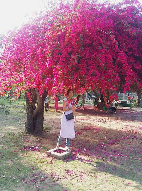В парках Нью-Дели растут прекрасные бугенвиллии