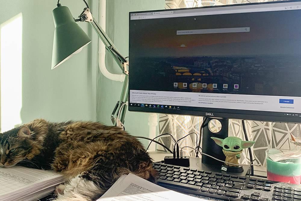 Мое рабочее место дома, малыш Грогу и кошка — неотъемлемые его части