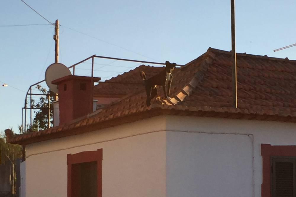 Собака на крыше там нормальное явление, потому что с другой стороны этот дом практически касается крышей земли