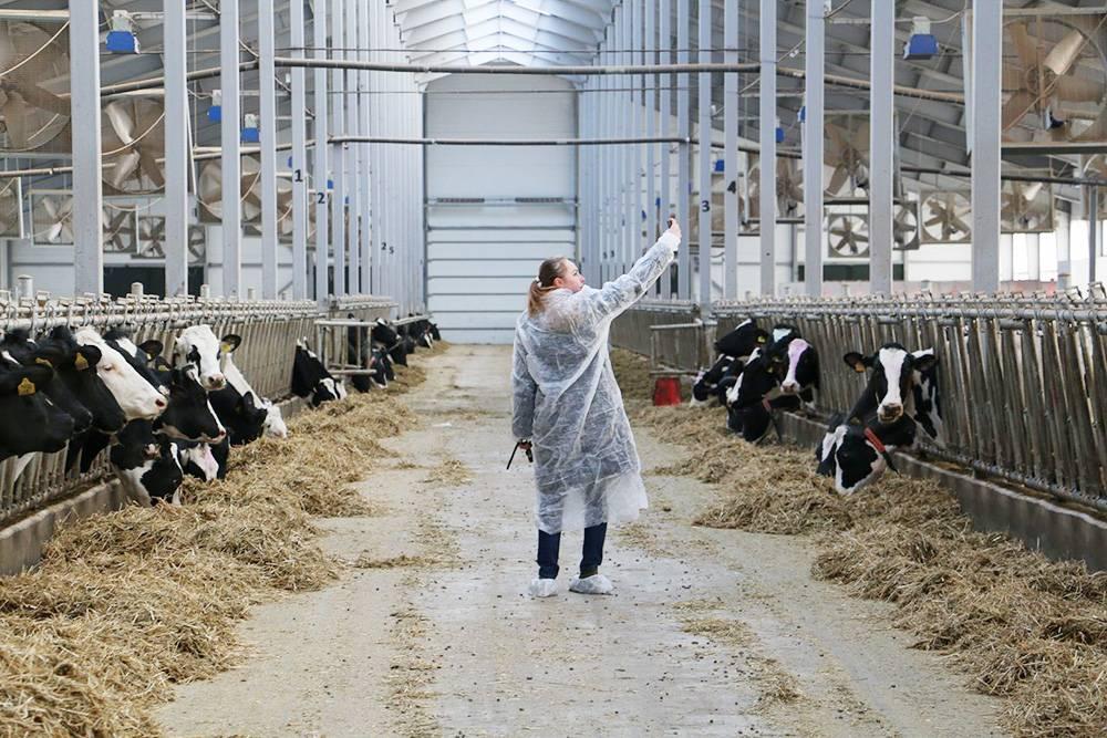 За время работы в Союзмолоке я побывала на многих фермах и заводах по производству молочной продукции