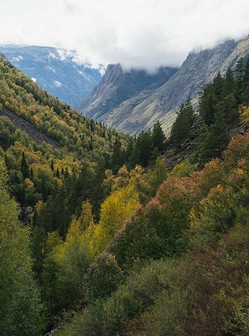 По пути открываются красивейшие виды Алтайского заповедника