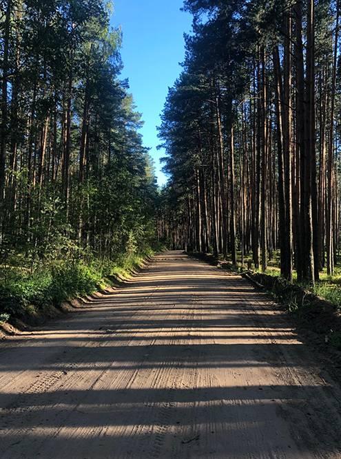 Дорога через Монахов лес после выезда из Твери