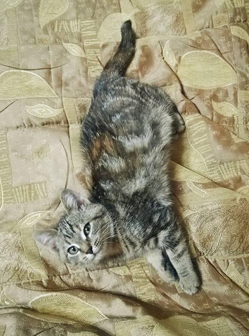 Когда Гоблин привыкла ко мне, она стала часто приходить помурчать на диван
