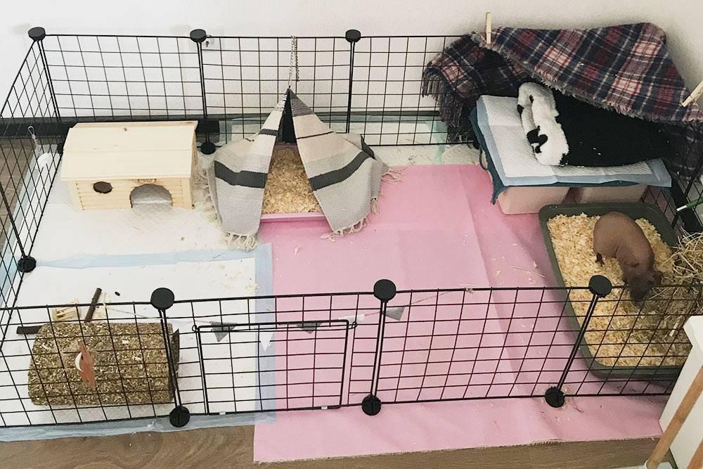 Это вольер Крынки. Слева — домик дляжаркой погоды, палатка-укрытие с сухим кормом и съедобный туннель. Справа — мешок длясна, лоток с опилками, поилка и сенник