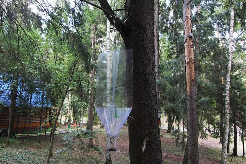 Феромонная ловушка на подступах к дому. Источник: лесной форум «Гринпис»