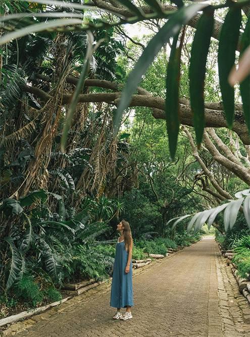 Идешь по дорожкам, а по сторонам — настоящие джунгли