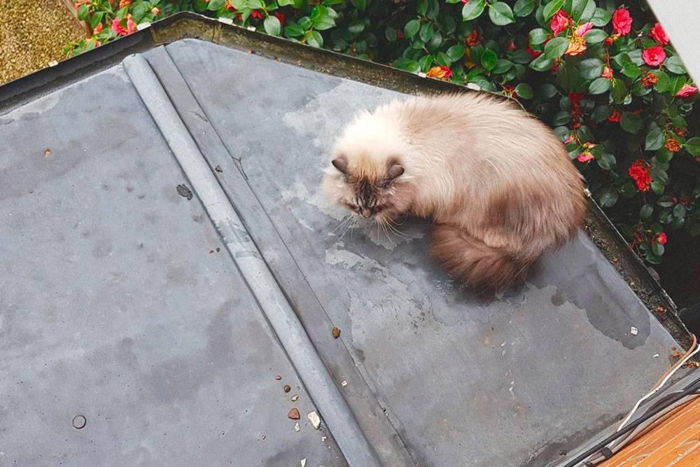 Кот в поисках выхода из ситуации