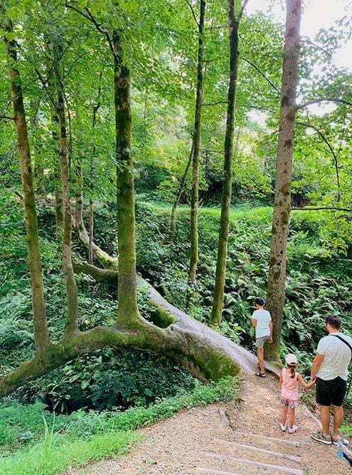 Дерево-мост — знак, что вы уже в конце ботсада