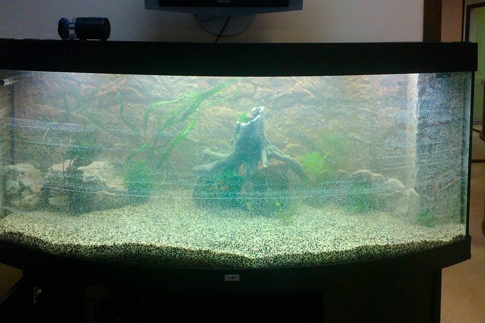 Так выглядит аквариум сразу после оформления изапуска. Рыбы там появятся только через одну-две недели