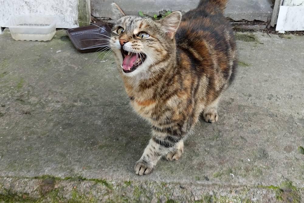 По пути мне встретилось около 20 котов, которые дружно съели 300граммов развесного корма