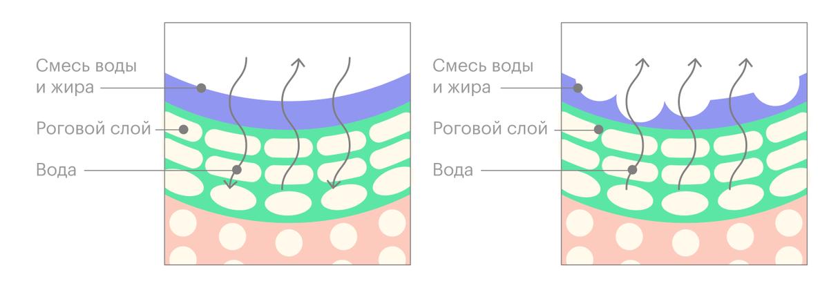 При нормальной влажности воздуха кожа не теряет влагу и восполняет потерю извне. При сухом воздухе кожа теряет больше влаги и становится проницаемой и обезвоженной