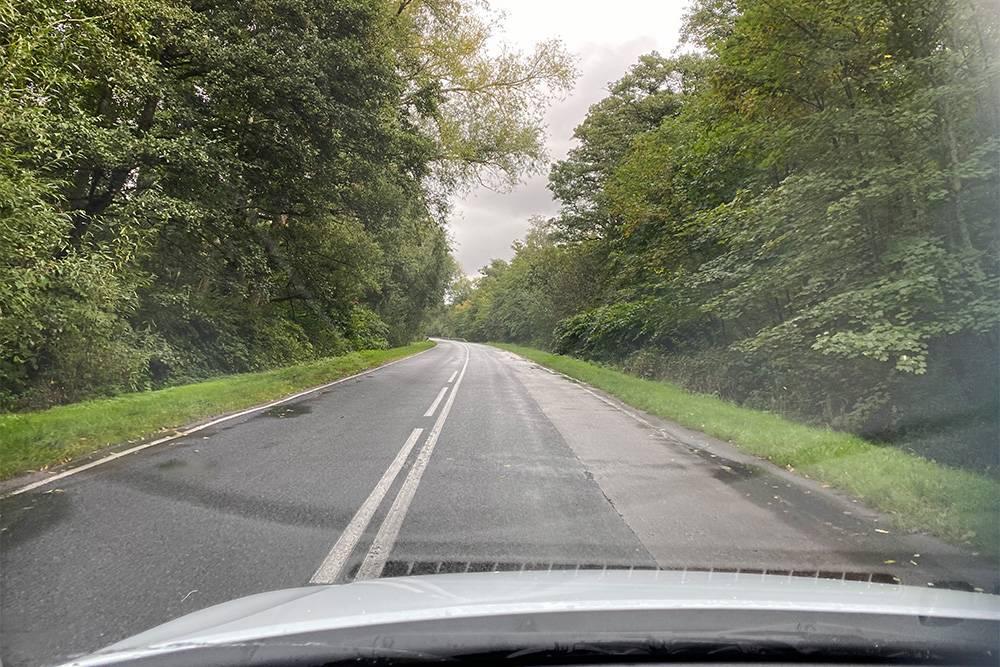 Проселочная дорога в области. Каждую минуту нужно быть готовым, что на асфальт выскочит лисица илиолень