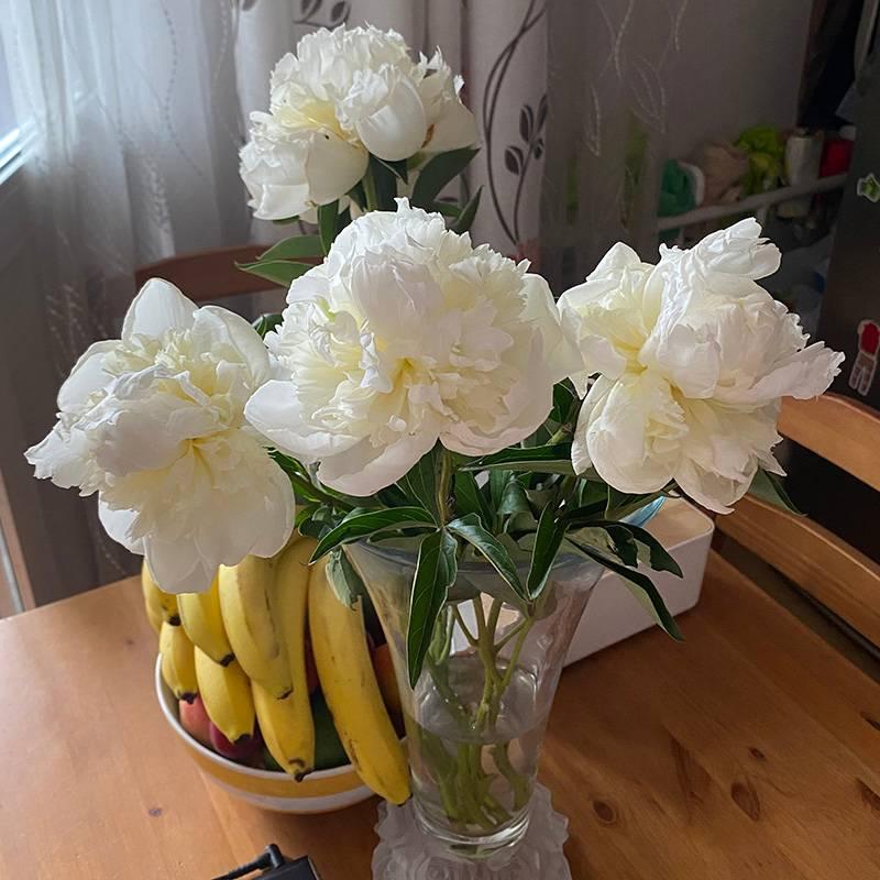 Пионы — мои любимые цветы. Жаль, что они так мало стоят, зато какой запах!