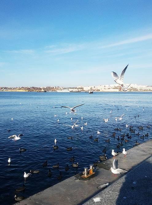 Вокруг памятника всегда много птиц — интересно ловить кадры с ними