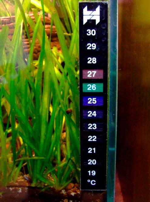 Термометр-наклейка навнешней стороне. Источник: mysku.ru