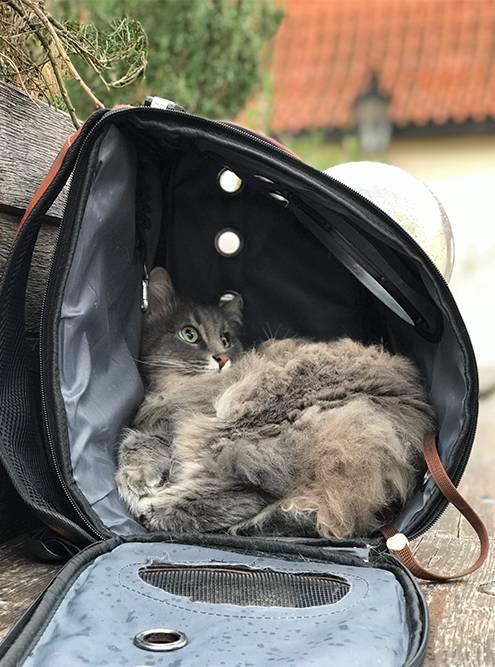 Позировать кошка уже научилась