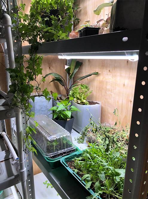 Система гидропоники. Здесь выращивают руколу и другую зелень