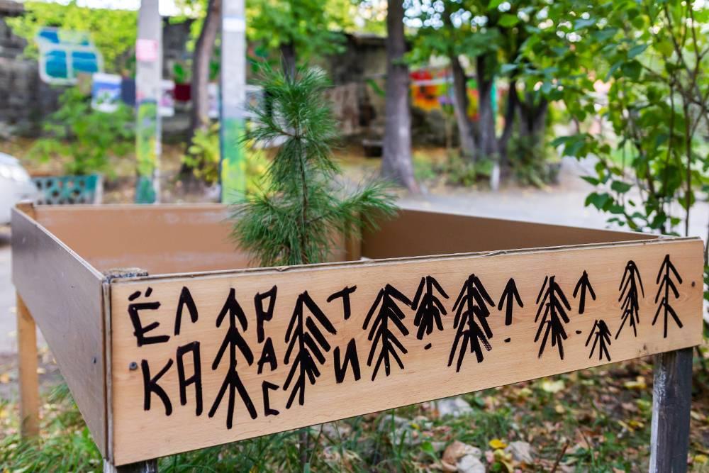 Мы не только переписали все деревья возле нашего дома, но и высаживаем новые