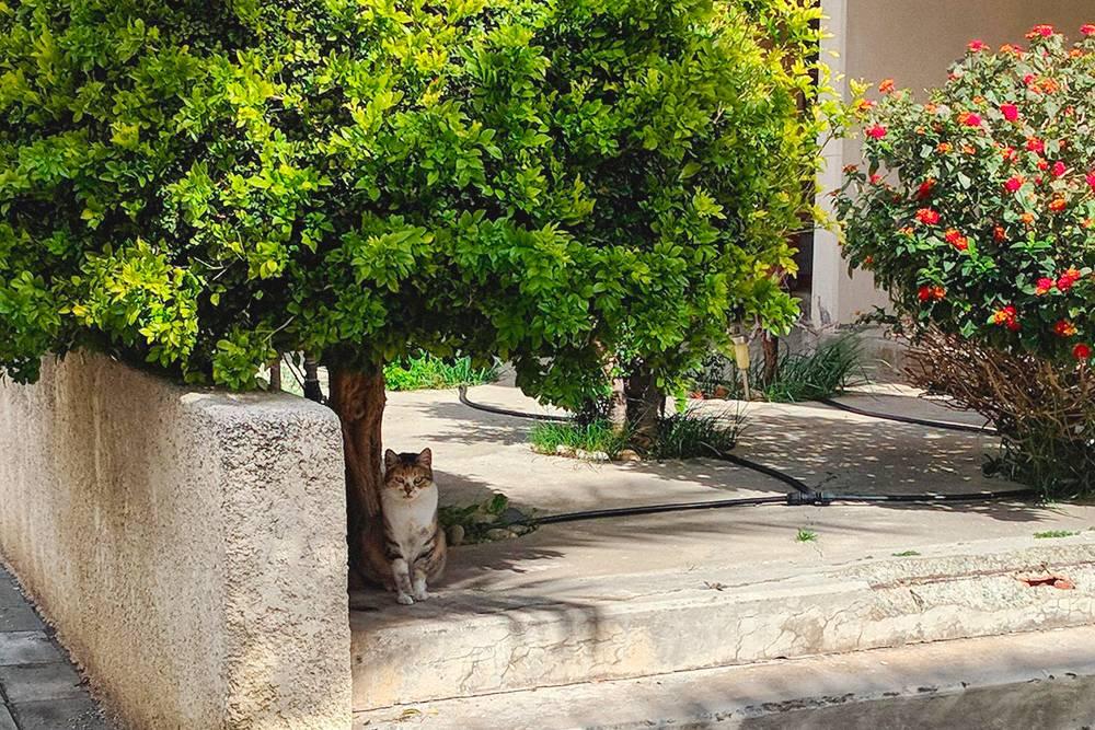 Котик притаился под деревом первого марта