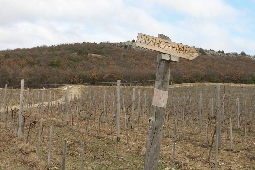 Я была на виноградниках «Мангупа» зимой. Летом и особенно осенью они выглядят намного живописнее