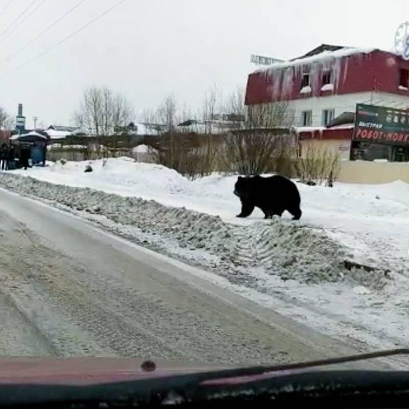 В итоге оказалось, что именно этот медведь вродебы был не из леса, а из какого-то питомника-зоопарка. Все закончилось благополучно