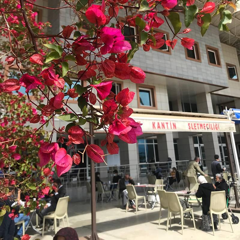 Обычная государственная поликлиника длявзрослых в Турции