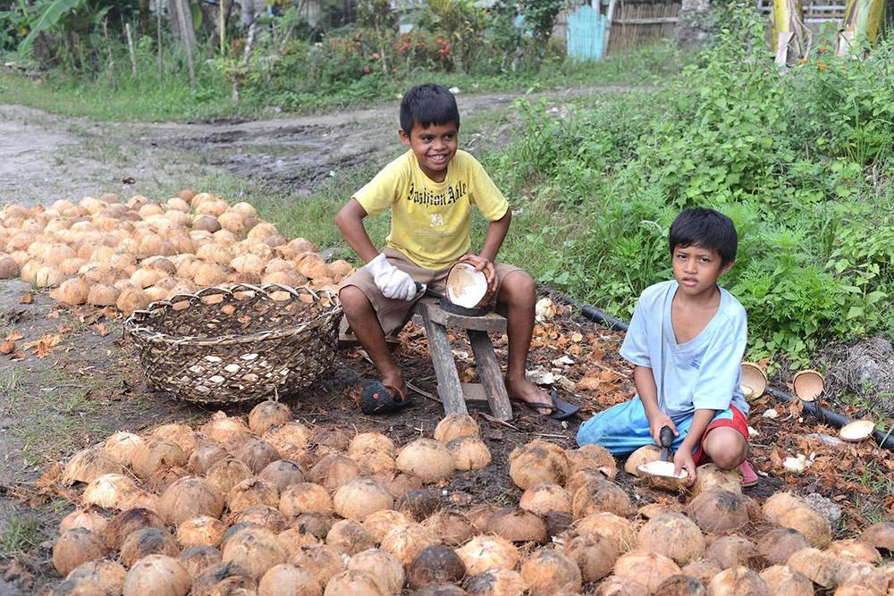 Дети собирают кокосовую мякоть — копру
