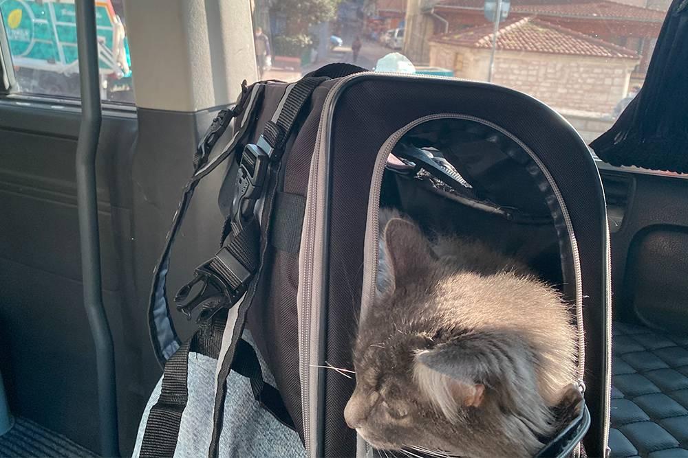 Дуся привыкла к своему дорожному домику и спокойно путешествует в нем