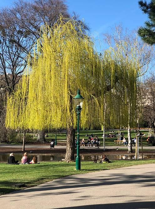 Весной все сидят впарках, которых вВене много