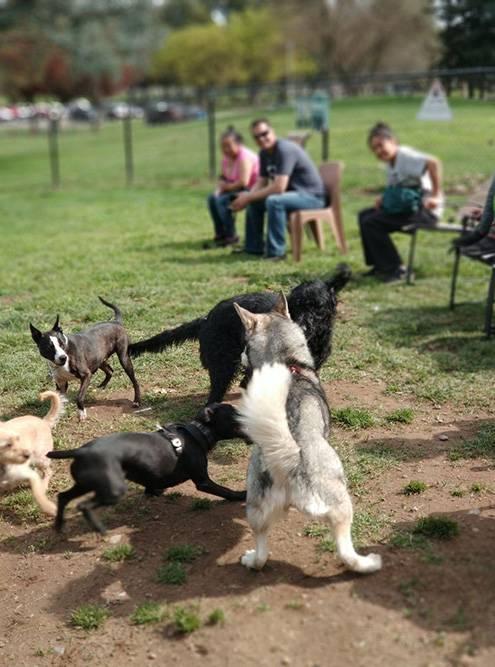 В собачьих парках много места, есть питьевая вода и мусорные пакеты