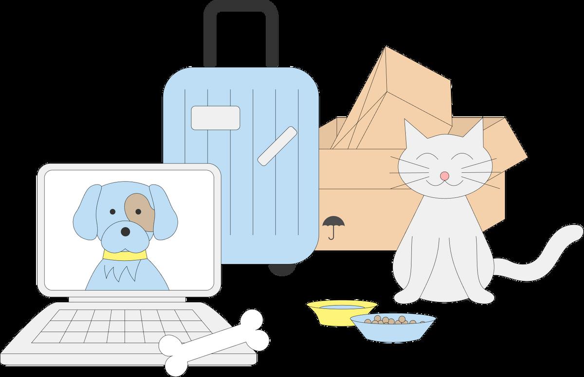 «Пришлось всю дорогу гладить кота»: 5 советов, которые помогут упростить переезд с животным