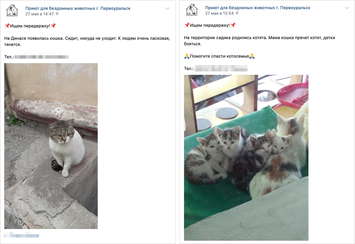 В соцсетях приютов регулярно появляются объявления о животных, которые нуждаются в передержке