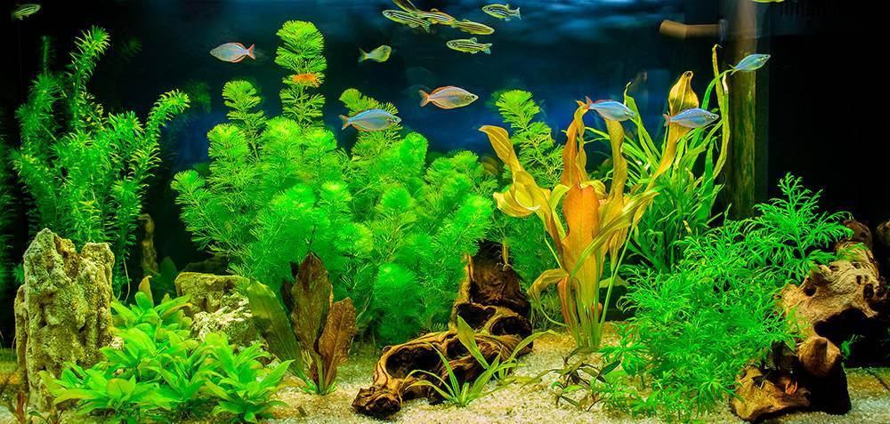 Так выглядит аквариум стропическими рыбами ирастениями. Источник: Andrey_Nikitin / Shutterstock