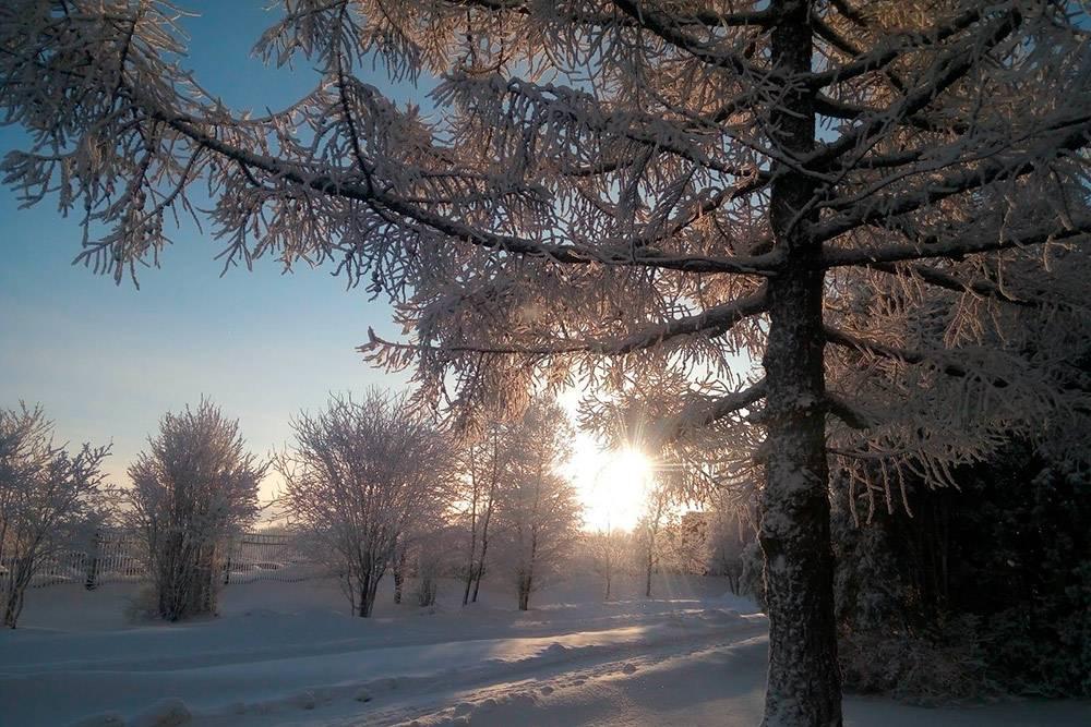 Рецепт красивой зимы: низкая температура и высокая влажность. Поэтому зимой все вокруг Череповца покрывается снежной бахромой