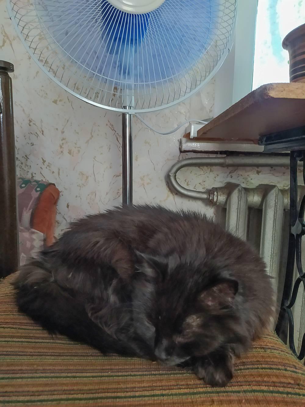 Жара. Кошка спит подвентилятором