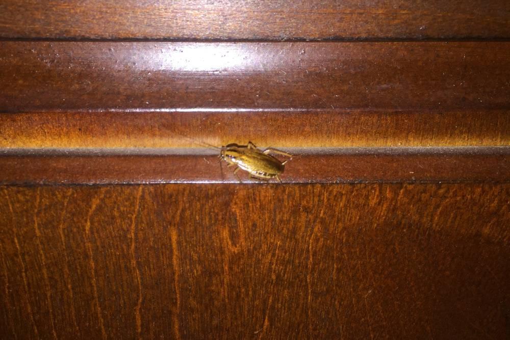 Фотография не самого расторопного таракана в доме у Кейли