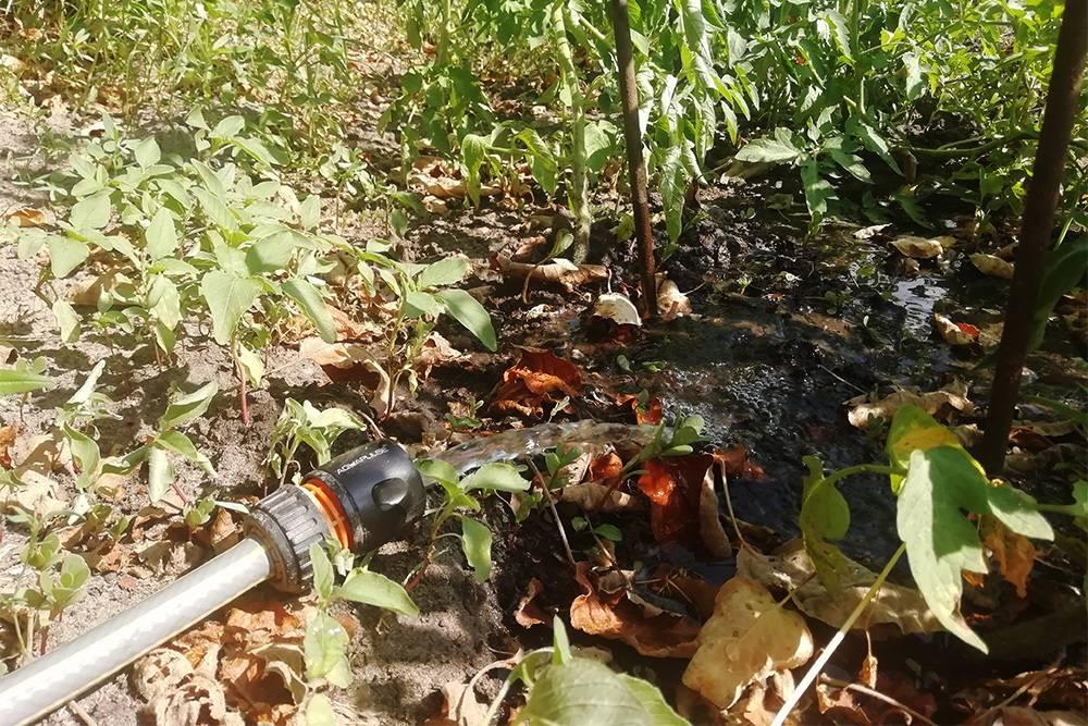 Так я поливала огород четыре года назад. Каждые пять минут перекладывала шланг, чтобы полить весь участок