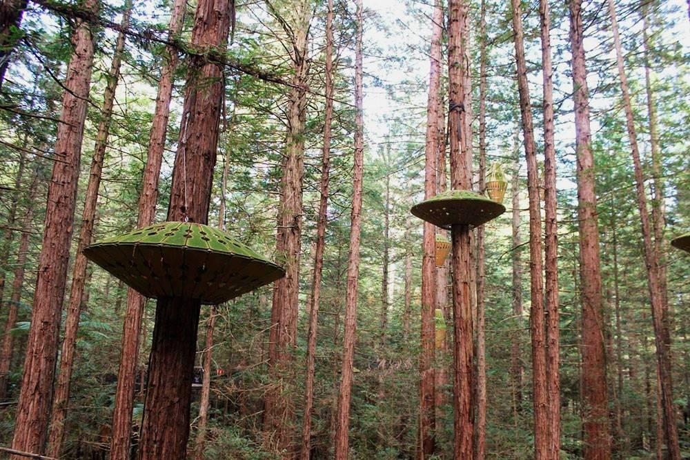 Деревянные фонари на секвойях
